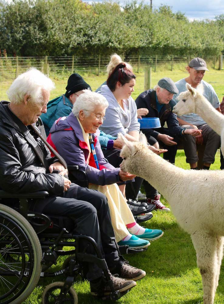 Amys-Care-Alpaca-Visit-Blencogo-Farm-3-2018